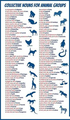 Collective nouns for animal groups. My favorites are an exaltation of larks, a flamboyance of flamingos, and a murmuration of starlings :)