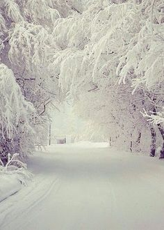 beautifully snowed in ❄❄🌳🌲 - Winter - Snow Winter Pictures, Cool Pictures, Beautiful Pictures, Winter Photography, Nature Photography, Winter Schnee, Winter Love, Winter Snow, Winter Trees