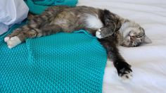 She couldnt be more comfortable   http://ift.tt/1st47HJ via /r/cats http://ift.tt/1XgEZiB  cats funny pictures