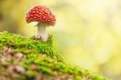 http://digital-photography-school.com/21-magical-mushroom-toadstool-fungi-images