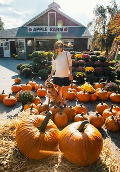 Woodstock Orchards, CT