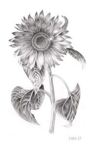 B Sunflower Tattoo