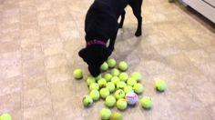 Un chien difficile devient un amour lorsque son maître comprend son histoire. Cliquez pour découvrir l'histoire :)