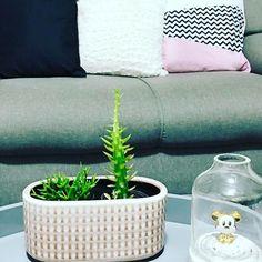 🌵MY  H O M E 🌵 Details  Cachepô da @interioredesigndecor muito amô. Almofadas @zarahome a preta e a bege e a tricolor da @westwingbr . Cúpula Escandinava @hygge_decor . . . . #home #friends #parceria #love #decor #decoration #myhome #decoracao #cactus #minhacasa #escandinavo #life #igs #instalike #instagram #friends #interior123 #interiordesign #exporevestir #live #scandinavian #scandinaviandesign #europe #trip #