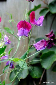My garden De bloeiende cottage tuin