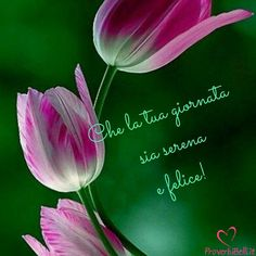 Good Morning Inspirational Quotes, Desiderata, Life Images, Instagram Posts, Pocahontas, Karma, Baby, Amor, Good Morning Wishes
