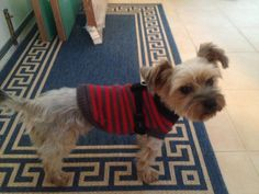 Rocking my new red jumper - now I'm ready for winter. Let's go for a walk now mum!