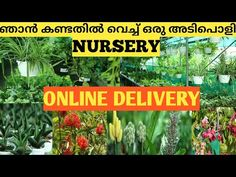 Plant Nursery Visit    All Types of indoor and outdoor Plants    Online Delivery    variety pots - YouTube Garden Online, Plants Online, Plant Nursery, Outdoor Plants, Pots, Delivery, Indoor, Youtube, Interior