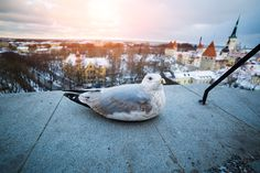 Unique Travel Destinations: Tallinn, Estonia  www.HostelRocket.com