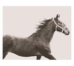 Vintage Horse Framed Print by Jennifer Meyers #potterybarn