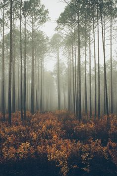 landscapes, tumblr,forest,