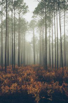 landscapes, tumblr,forest,