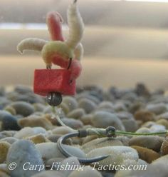 Critically balanced maggot carp rigs