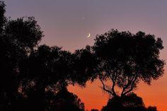 Rutas nocturnas por el espacio natural. El objetivo principal es la transmisión de los valores ambientales, históricos y culturales que presentan los Espacios Naturales del Corredor Verde del Guadiamar y la zona sevillana de Doñana.
