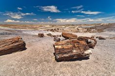 Petrified Forest National Park is a United States national park in Navajo and Apache counties in northeastern Arizona. Named for its large deposits...