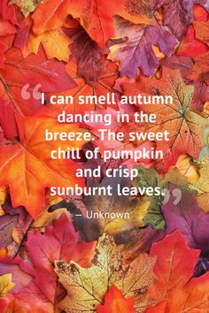 10 beautiful fall quotes - best sayings about autumn Dessert Stand, Quotes About Attitude, Season Quotes, Autumn Cozy, Autumn Quotes Cozy, Autumn Quotes And Sayings, Sunday Quotes, Autumn Art, Happy Fall Y'all