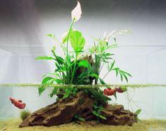 1 Pcs Dragon Resin Aquarium/Terrarium Decoration Crocodile Skull For Fish Tank Resin Ornament Decorate Your AquariumDecorations & Substrate Planted Aquarium, Betta Aquarium, Aquarium Aquascape, Aquariums, Aquarium Terrarium, Nature Aquarium, Aquascaping, Aquarium Design, Fake Plants