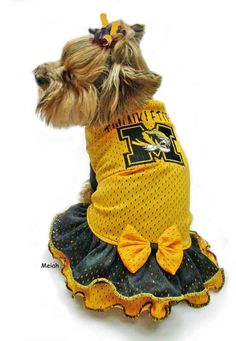 Mizzou puppy dress. That is dedication.
