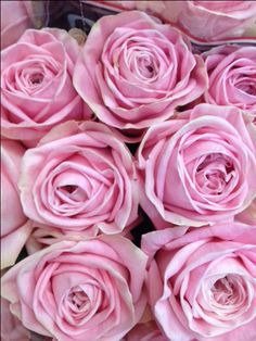 Rose 'Heidi'...Sold in bunches of 20 stems from the Flowermonger the wholesale floral home delivery service.
