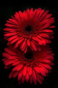 Flowers nature beauty's by Kanaksinh Barsadia on Flowers nature beauty's by Kanaksinh Barsadia on Purple Flowers Wallpaper, Flower Phone Wallpaper, Beautiful Flowers Wallpapers, Cellphone Wallpaper, Colorful Wallpaper, Flowers Nature, Exotic Flowers, Amazing Flowers, Pretty Flowers