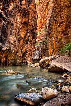 Narrows of Zion National Park