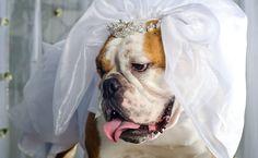 """Folha de S.Paulo - São Paulo - Pets viram """"daminhas de honra"""" e são convidados ilustres de casamentos - 24/02/2013"""
