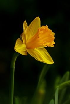 Dark Flowers, Exotic Flowers, Amazing Flowers, Purple Flowers, Spring Flowers, Wild Flowers, Peonies Garden, Flowers Garden, Flower Sleeve