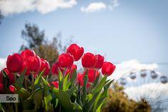 Floriade 2015 - Canberra
