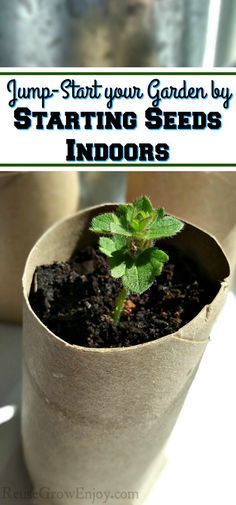 Jump-Start your Garden by Starting Seeds Indoors - Reuse Grow Enjoy