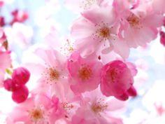 Flower Wallpaper For Desktop Computer | Pretty Flower Desktop Wallpaper Theme | True Ways for Pakistan
