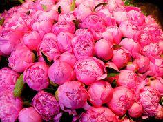 Pink peonies :)