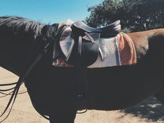 Love this with a western blanket under an English saddle.