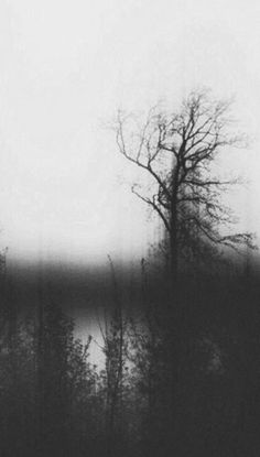 Dark Landscape, Black Metal, Black And White, A Moment In Time, Bw Photography, Dark Forest, Forests, Dark Art, Picture Quotes