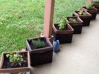 Planting on milk crates.... Also I plant some red cabbage on a small pool...