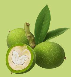 Fruits p.2 on Behance