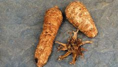 Herb to Know: Devil's Claw - This wild African plant combats joint pain.