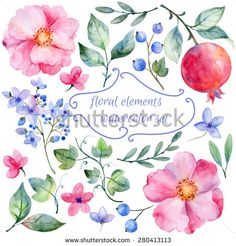 Set of different red, pink flowers and pomegranate  for design. Watercolor roses, leaves. pomegranate . Set of floral elements for your compositions. - stock vector