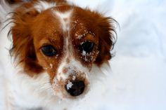 Katie Enjoys the Snow | by Justin Good