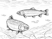 Rainbow Fish Coloring Page . 30 Elegant Rainbow Fish Coloring Page . Coloring Rainbow Fishing Pages Books Ice Hand Drawing Get Truck Coloring Pages, Coloring Book Pages, Coloring Sheets, Fish Drawings, Animal Drawings, Art Drawings, Salmon Drawing, Rainbow Fish Coloring Page, Fishing Pictures