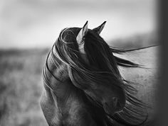 My favorite horse pic