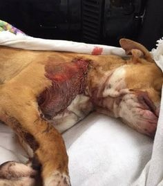 Dog saved from frigid cold is killed just two days after going to foster home. Justice for Shayla!