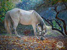 An horse walk in freedom between the colors of autumn -