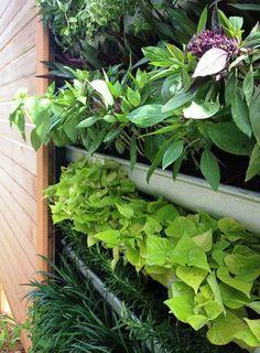 DIY Vertical Gardens or Living Walls – Step by Step Tutorials ,