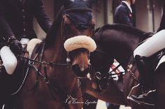 Paddock Atmosphere. #equine #sauthermes #pferdesport #horses_of_instagram #horsestagram #sporthorse #horsephotography #showjumper #equestrianlifestyle #equestrian #fromwhereiride #sauthermes #equestrianphotography #equinephotography #equestrianlife #equestrianstyle #showjumpers #häst #pferd #globalchampionstour #showjumping #animois #animoitalia #longinesmasters #pferdeliebe