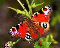 Fietje Waarom vlinderzoekplaat