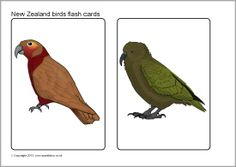 New Zealand birds picture cards (SB9726) - SparkleBox