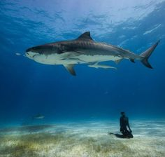 free diving by National Geographic