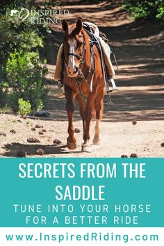 Gain confidence in the saddle with a telepathic trainer for you and your horse.