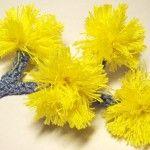 365 Crochet Flower Patterns designed by Camelia Shanahan - 30 crochet flowers designed in June 2012 for the 365 Crochet Flowers Project. Crochet Flowers, Crochet Flower Patterns, Knitting Patterns, Flower Pattern Design, Flower Designs, Knit Or Crochet, Crochet Motif, Flowering Plants, Planting Flowers
