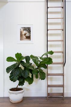 Big Sur Beach, Rock Room, Places In England, Hampstead Heath, Beach Room, Tree Photography, Ladder Decor, Amy, Ladders